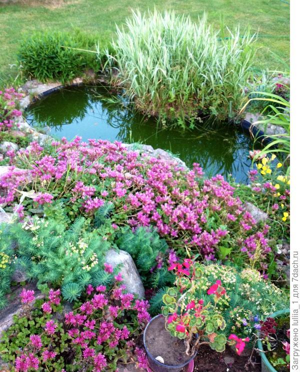 Мой любимый уголок в саду,маленький прудик с альпийской горкой)