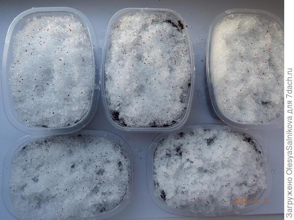 посев по снегу