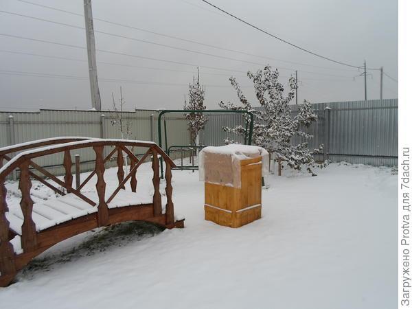 Зимовка форзиции