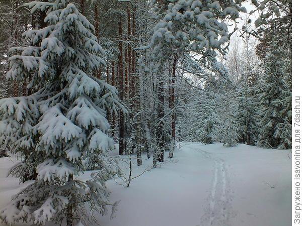 Зимний лес!
