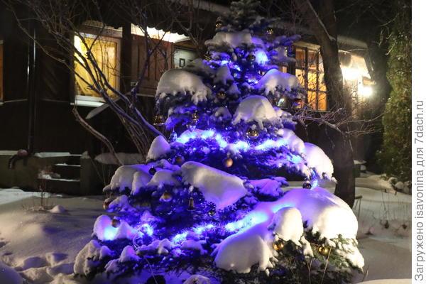 Наконец-то! Последние годы так часто не бывает снега, что впору  объявлять новый праздник 21 века: Новый новый год (20 января).