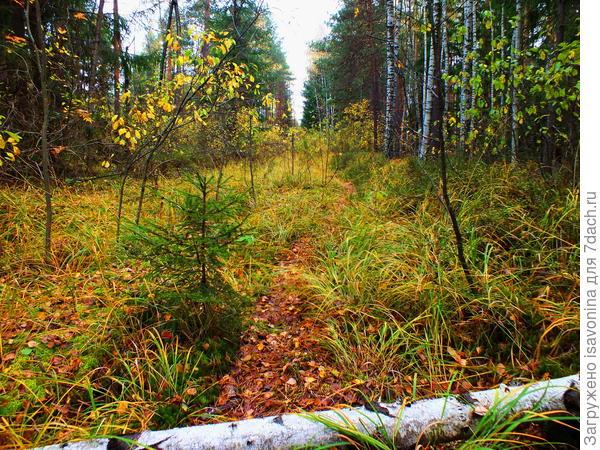 Лесной тропой