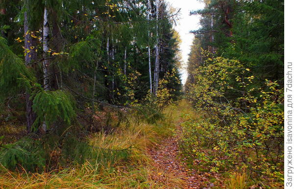 По лесу