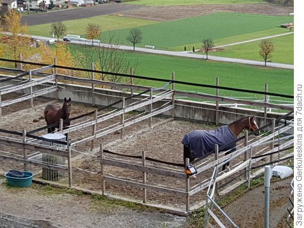 И лошадки