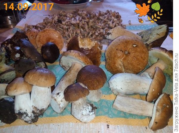 урожай лесной)