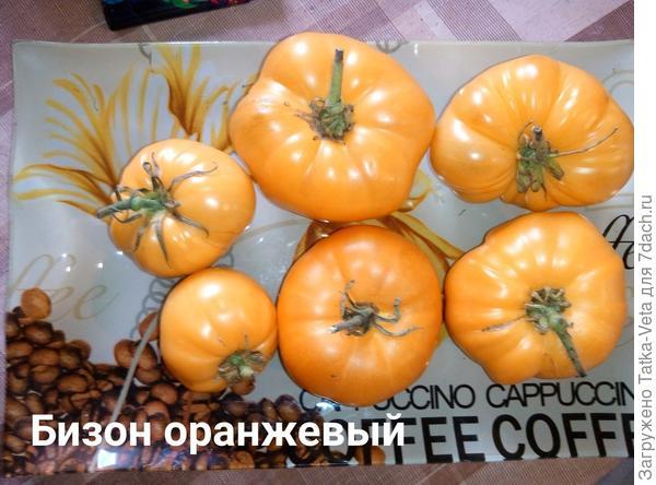 Бизон оранжевый
