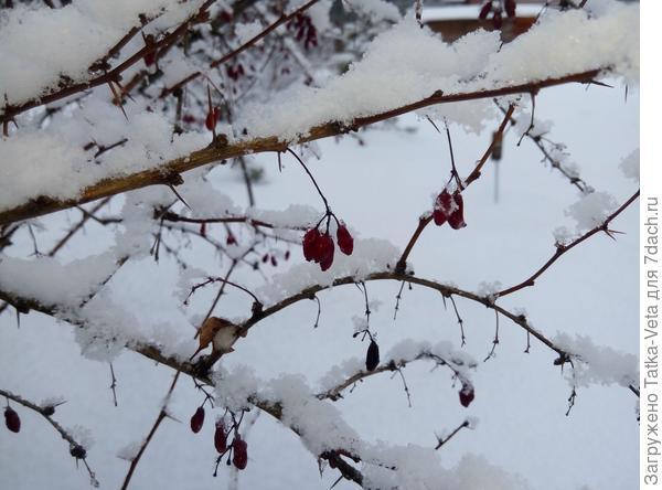 Зимушка-зима (12.12.2017)