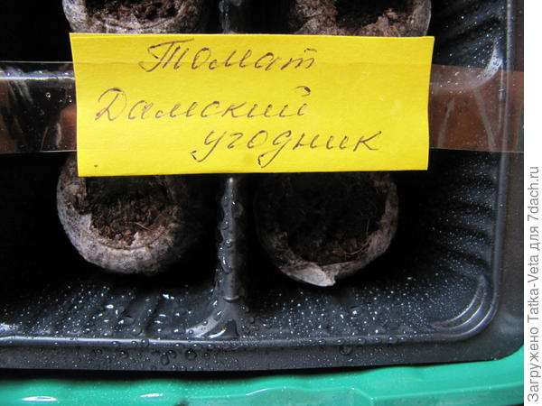 """ТорÑ""""яные Ñ'аблеÑ'ки с семенами помещены в мини-парник."""