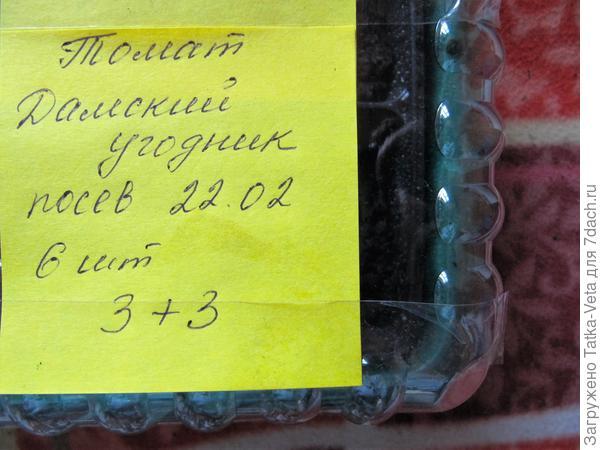 """Семена томата """"Дамский угодник"""" посеяны."""