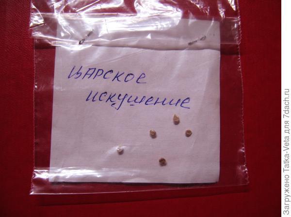 """Пять семечек томата """"Царское искушение f1"""" полученные в подарок..."""