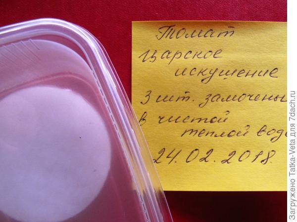 """Семена томата """"Царское искушение f1"""" замочены в ватных дисках."""