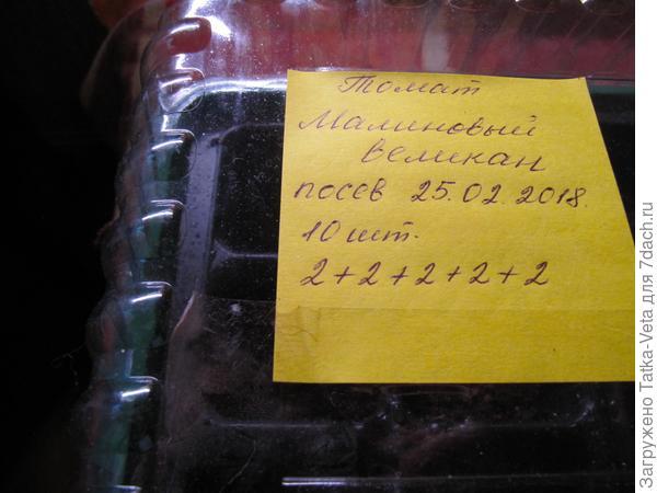 """Семена томата """"Малиновый великан"""" посеяны"""