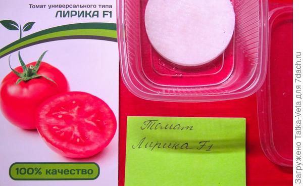 Семена томата Лирика f1 замочены в ватных дисках.