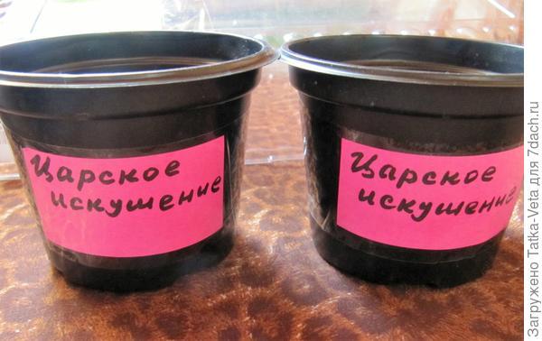 """Горшочки для томата """"Царское искушение f1"""""""