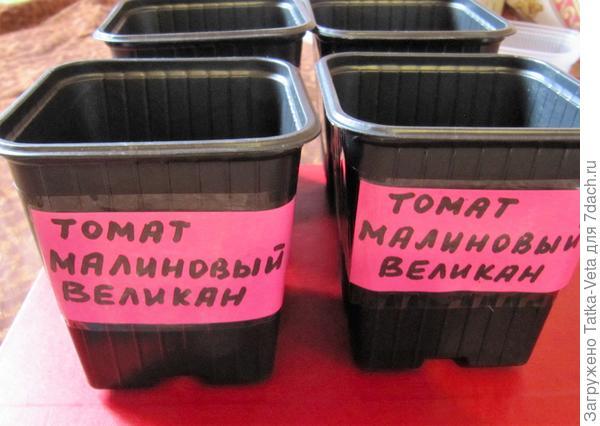"""Горшочки для томата """"Малиновый великан"""""""