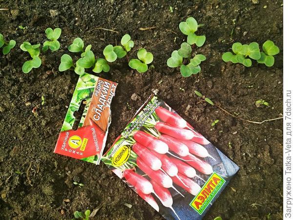 Редиска - самый ранний, самый быстрый овощ!