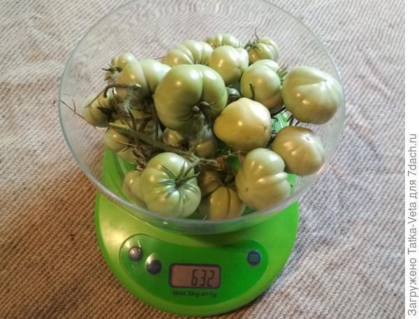 Последние собранные плоды томата Медовый гигант на весах. 12.09.2018