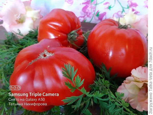Крупные сладкие томаты