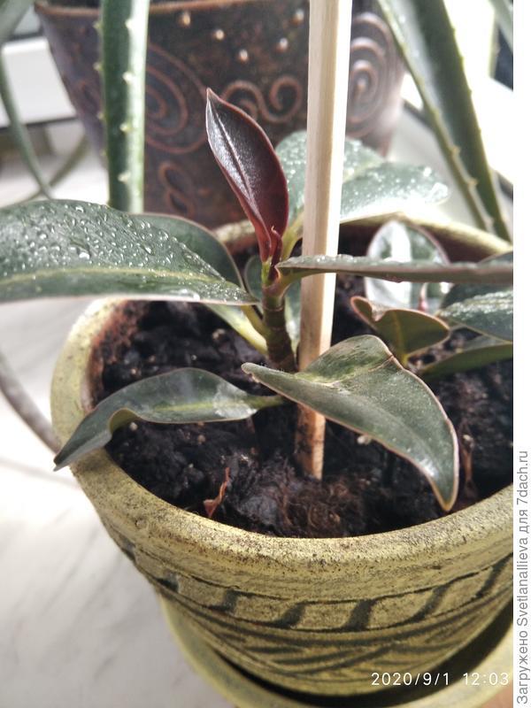 Как называется комнатное растение? Как за ним ухаживать?