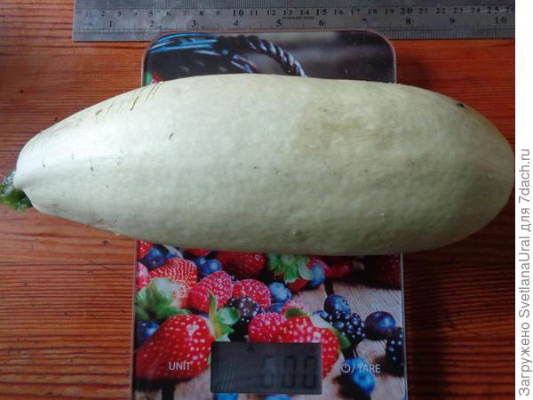 Первый плод 600 гр