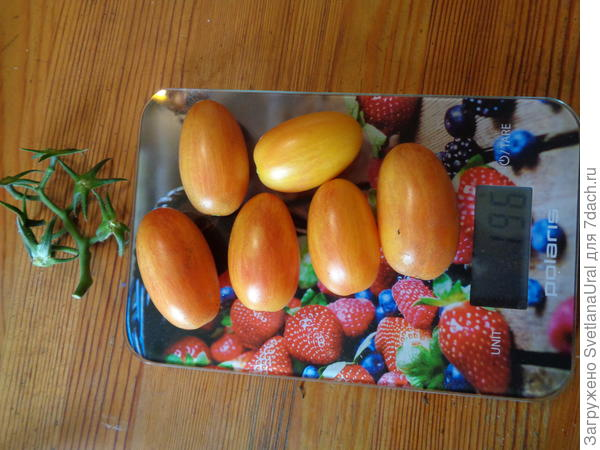 Одни помидорчики