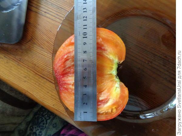 Замерила диаметр плода.