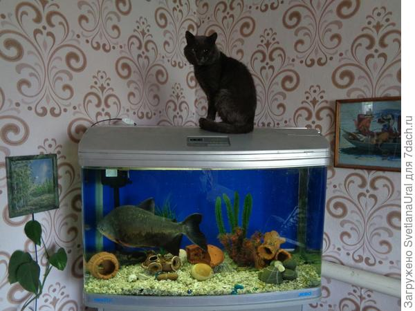 Новый аквариум.