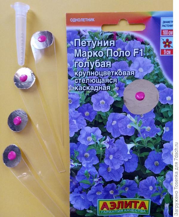 Марко Поло голубая с маячками, после пикировки заменю на садовые таблички