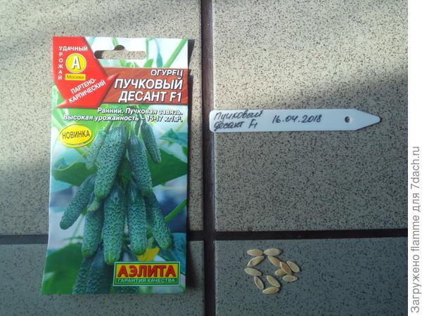 Семена Пучковый десант