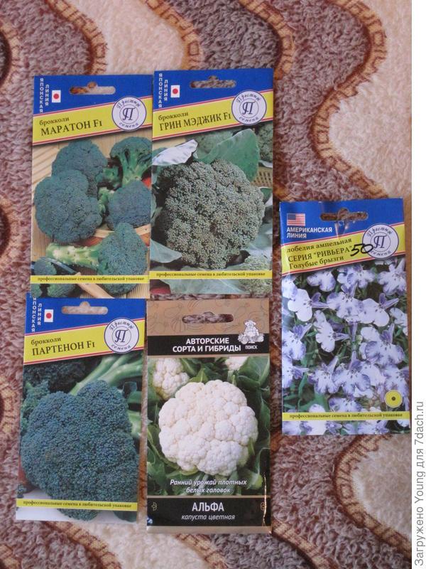 Семена цв. капусты и брокколи.