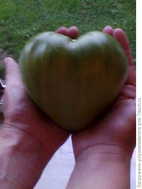 Моё сердце вам !❤❤❤
