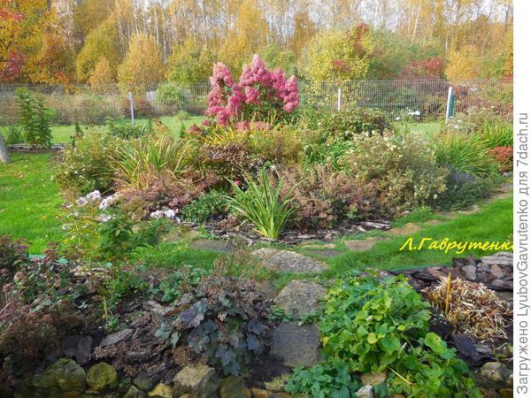 Метельчатая гортензия Ваниль Фрез в октябрьском цветнике.
