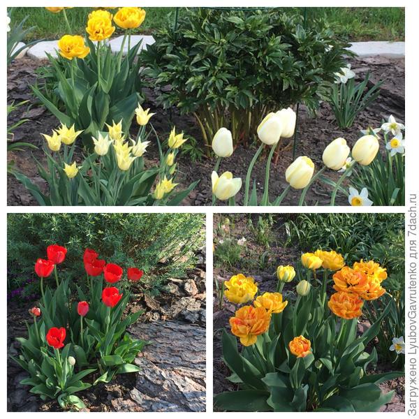 В мае каждый сад - маленький Кёкенхоф