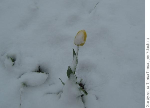 Не только заморозки в мае бывают, еще и снег ((
