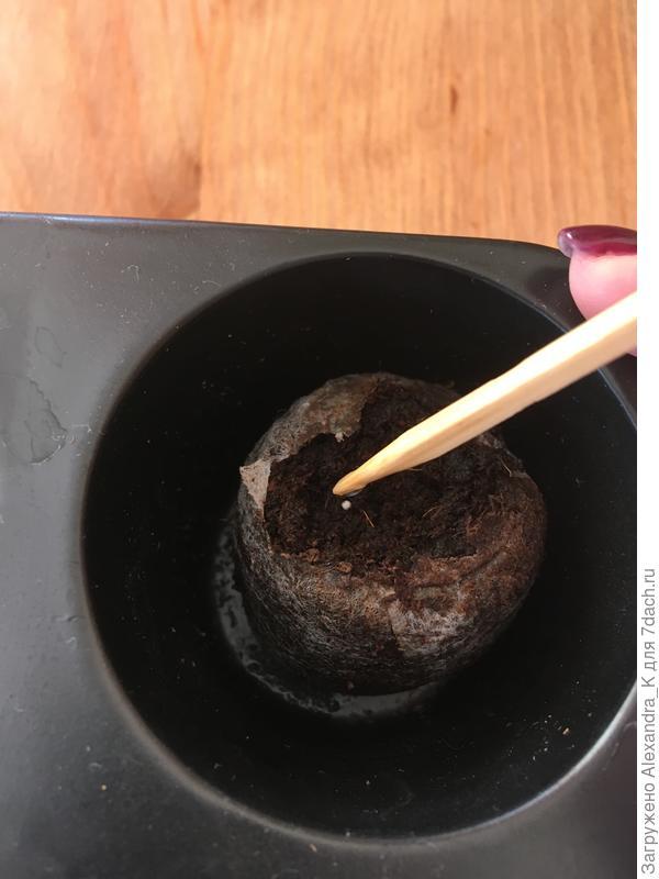 Разрушаем оболочку