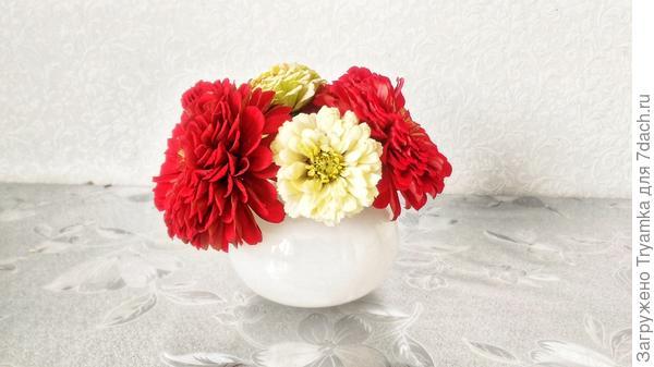 Обычно я не срезаю цветы в букеты, но тут не смогла удержаться.  Циния.