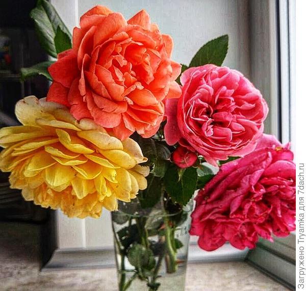 Ассорти роз :)