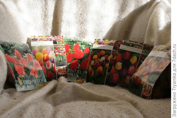 Осень - время осенней лихорадки , закупила кучу сортовых тюльпанов.
