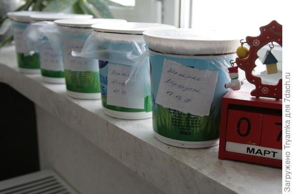 Готово, баклажаны посеяны , подписаны, поставлены в теплое место.