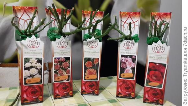 сортовые розы от Топаловичей.