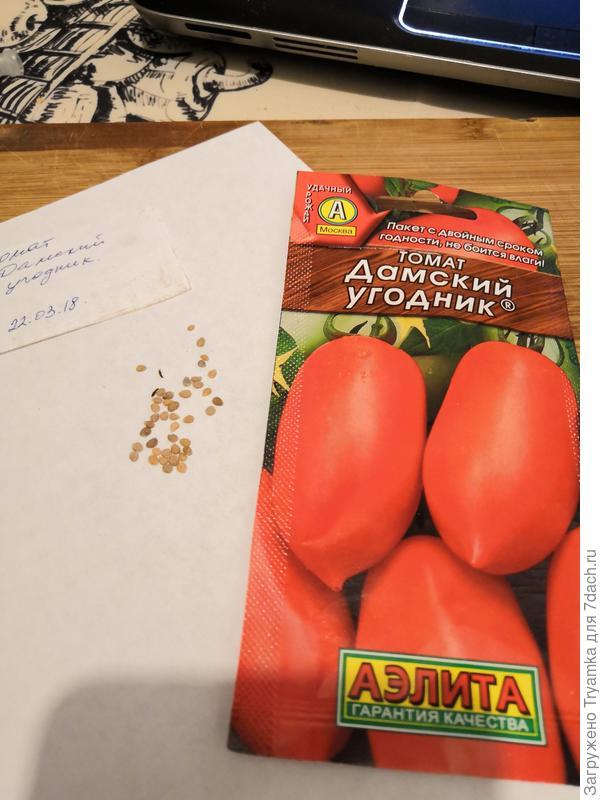 подготовка к посеву томат Дамский угодник.