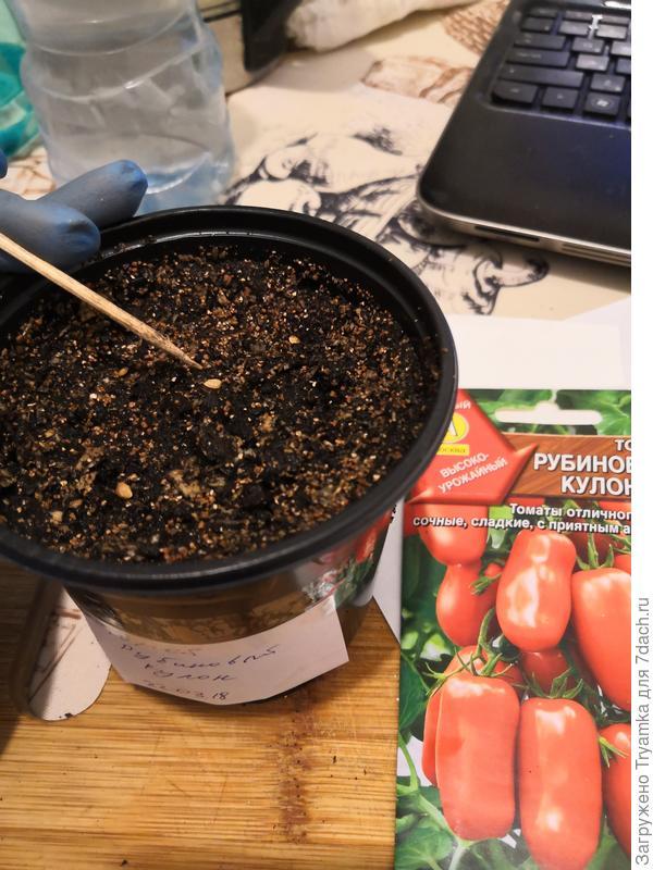 раскладываю семена с помощью шпажки.