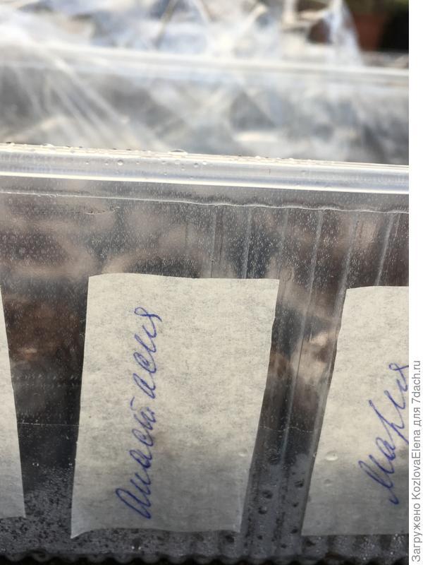 Посев семян  в таблетки