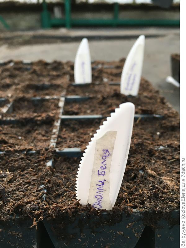 Посеянные семена в почвенный грунт