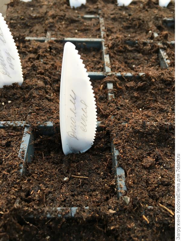Посев семян в почвенный грунт