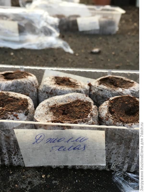 Посеянные семена в таблетки