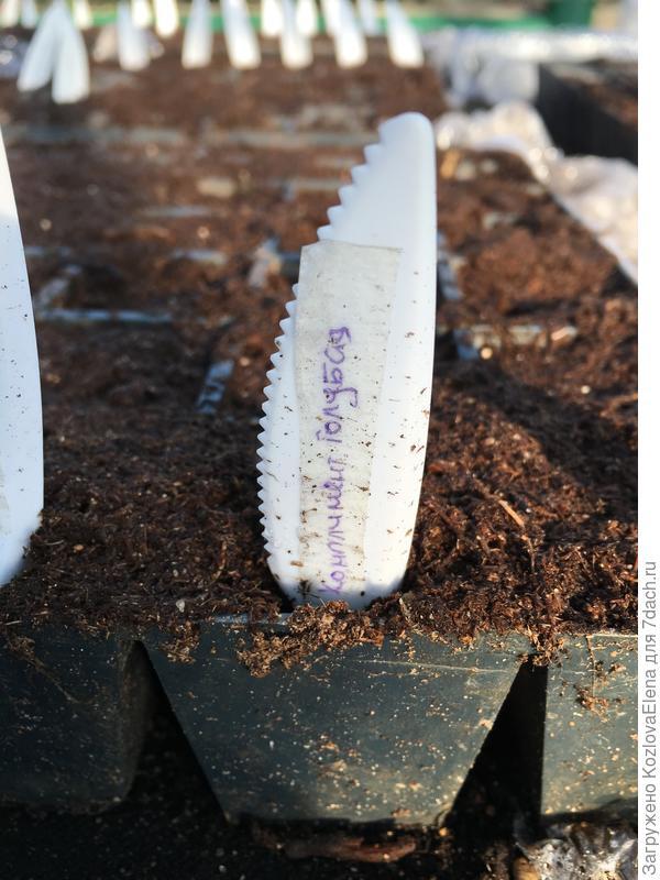 Посев семян в торфяной грунт