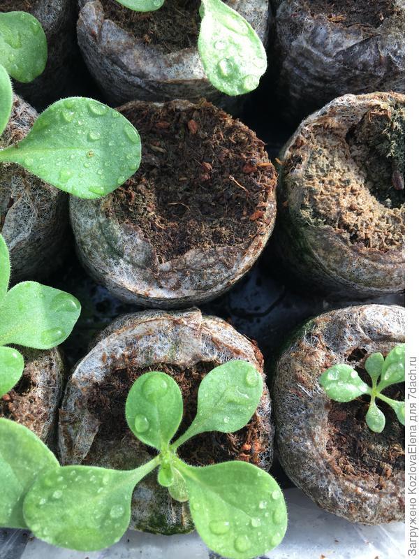 30.03.18. Посев семян в таблетки
