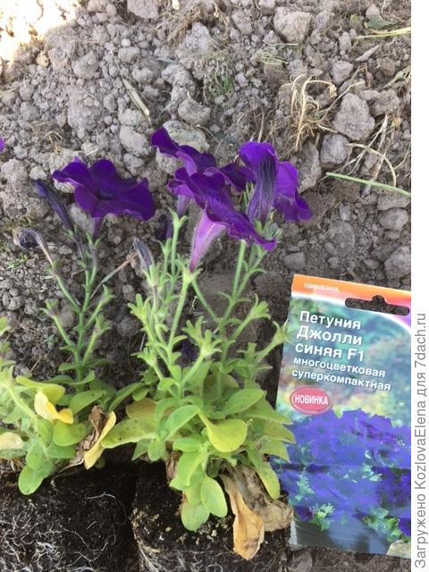 Растения перед высадкой (таб. Джиффи), 02.06.2018