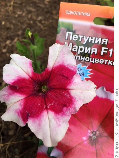 Незначительные повреждения цветков
